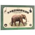 動物大百科·大小能目測的野生動物